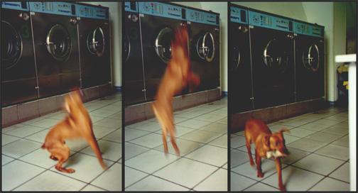 Puppy at the laundrymat.