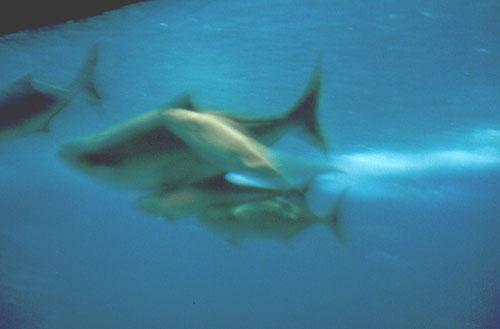 Pavilhão dos Oceanos (aquarium)