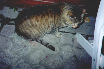 The cat who also ate the fried fish dinner
