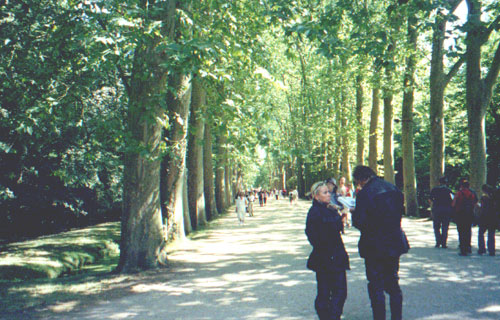 The tree-lined path to Chateau Chenonceau